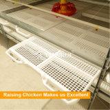 Дешево гальванизированная сваренная клетка бройлера цыплятины высокого качества провода для сбывания