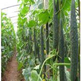 Plant Growth Regulatorの海藻Microbial Organice Fertilizer