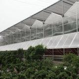 중국 공급자 다중 경간 유리 온실