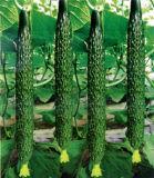 Машина чистки пузыря для Овощ-Cucumis плодоовощ Sativus;