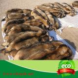 100% mujeres del collar grande de la piel del mapache