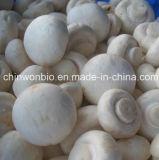 Порошок agaricus bisporus грибов кнопки