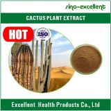 Pó natural do extrato da planta do cacto do extrato da planta