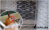 Sailin家禽の塀のための六角形ワイヤー網