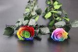 Rosas preservadas naturales baratas hechas a mano de la venta caliente nuevas