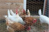 Compensation de fil de poulet de Sailin