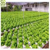 Система парника листа PC высокого качества Hydroponic для овощей
