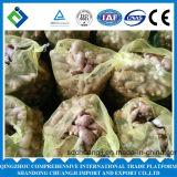 2015 frischer chinesischer Ingwer/frischer Ingwer im Ineinander greifen-Beutel
