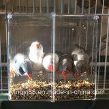 Ne vendre aucune cage d'oiseau de désordre avec des certificats de GV