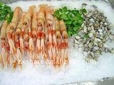 Macchina di ghiaccio granulare di vendita calda economizzatrice d'energia per i frutti di mare