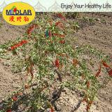 セイヨウカリンLbpの性質寧夏によって乾燥されるWolfberry