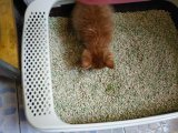 Clumping, управление запаха и легкий чистый сор кота Tofu