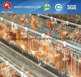 De moderne Apparatuur van het Gevogelte van het Landbouwbedrijf van de Kip