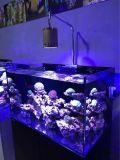 Leiden van het Aquarium van de nieuwe Technologie IP54 Koraalrif Gebruikte voor de Tank van Mariene Vissen
