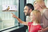 Yyb Premium Window Bird Feeder avec garantie de vie