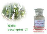 Esencia de eucalipto orgánica el 80% el 99% 100% (petróleo esencial del eucalipto puro) en bulto