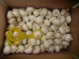 Buona qualità dell'aglio di origine bianca della Cina