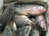 Saleのための凍結するFish Frozen Tilapia