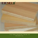 Furniture Decoration를 위한 높은 Quality Colourful Melamine Plywood