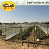 Плодоовощ органическое высушенное Goji Lbp Barbary Wolfberry мушмулы