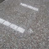 Mattonelle della pietra del granito di G664 Bainbrook Brown per il pavimento