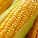 Il cereale degradabile ha reso a coperchio 45/400 di protezione della prova del bambino