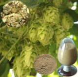 Extracto de flor 100% natural de lúpulo