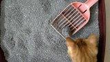 Soem-starke Mittel-Bentonit-Haustier-Reinigung