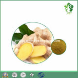 Soulager la poudre normale Gingerols 5%~20% d'extrait de fond de gingembre de toux de bronchite