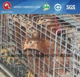 Leverancier de van uitstekende kwaliteit van China van de Kooi van de Kip