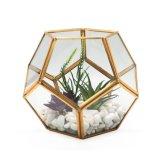 꽃을%s 아름다운 기하학적인 유리제 Terrarium