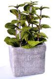 Clases de plantas artificiales (tomillo/Rosemary/hierbas/menta) en el crisol cuadrado del cemento para la decoración