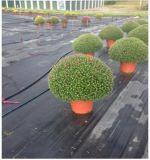 ブルーベリーのための雑草防除のマット