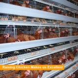 Matériel en acier de volaille galvanisé par bâti automatique de ferme de poulet de H EAU à vendre