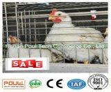 튼튼한 자동 유형 프레임 보일러 층 감금소 시스템 닭 감금소