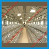 Oiseau Cage pour Hot Sale vers l'Algérie et l'Afrique