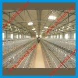 Uccello Cage per Hot Sale in Algeria ed in Africa