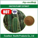 Extrait de cactus utilisé pour l'insomnie de palpitations cardiaques de remède