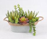 Planta artificial suculenta mezclada para la decoración de cualquie Lugar-Hogar/oficina/barra públicos con los crisoles del hierro