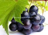 Het Uittreksel van het Zaad van de druif
