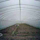 De landbouw Commerciële Serre van de Tuin van de Plastic Film