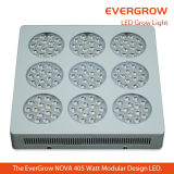 LED superiore Grow Light per Distribution