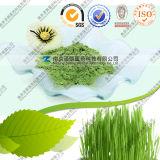 Produzent geben direkt wasserlösliches USDA-organisches Weizen-Gras-Puder an