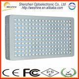 Luz profissional do crescimento do diodo emissor de luz da planta 900W com baixo preço