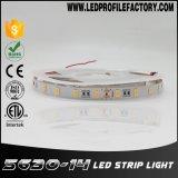 5630 bande UV de l'ÉPI DEL de 365nm Digitals