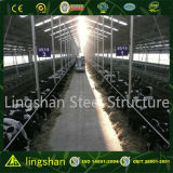 Edifício de aço claro pré-fabricado da construção da exploração agrícola da vaca do baixo custo do ISO