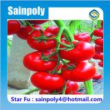 Парник изготовления Китая солнечный для томатов для сбывания