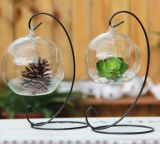 Vaso De Vidro De Suspensão DIY Plantando Container De Flor De Plantas Hidropônicas