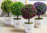 Plastic artificiale Plants e Flowers di Small Bonsai Plants