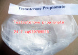 Testostérone Propionate Testosterone Propionate Testosterone Propionate dans Powder Form ou dans Liquid Form